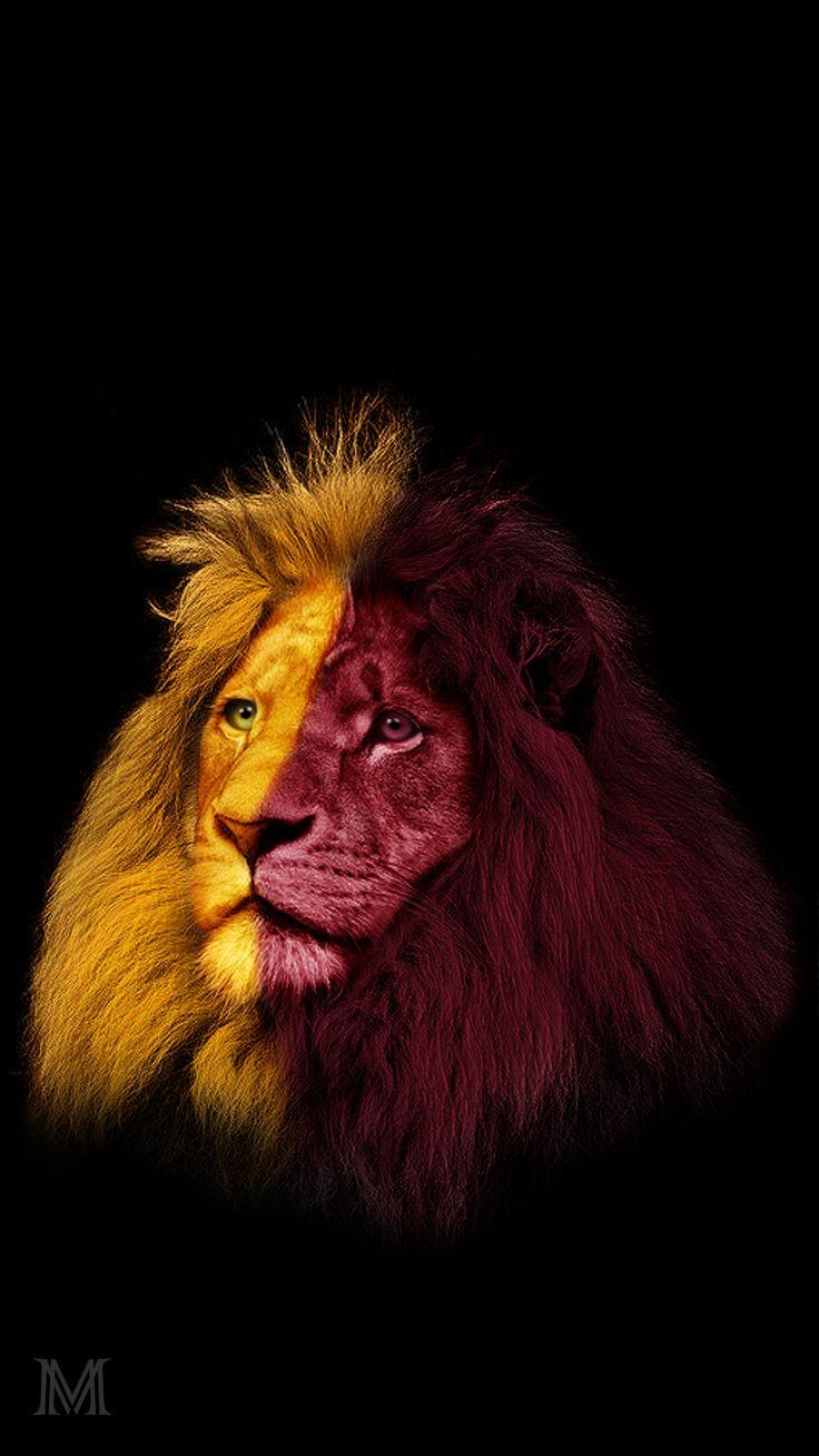 Sarı kırmızı aslan Galatasaray Duvar Kağıdı