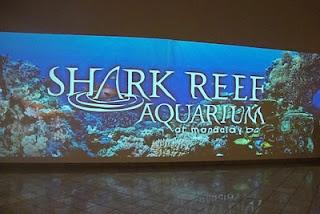 Shark Reef Aquarium - Mandalay Bay, Las Vegas -.