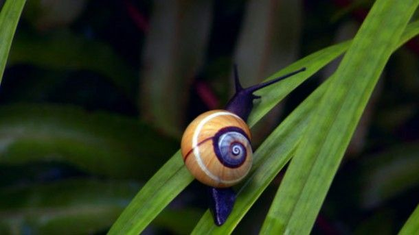 colourful snail - Google Search