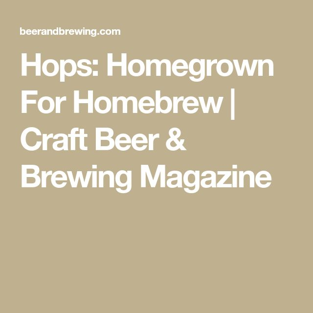 Hops: Homegrown For Homebrew   Craft Beer & Brewing Magazine