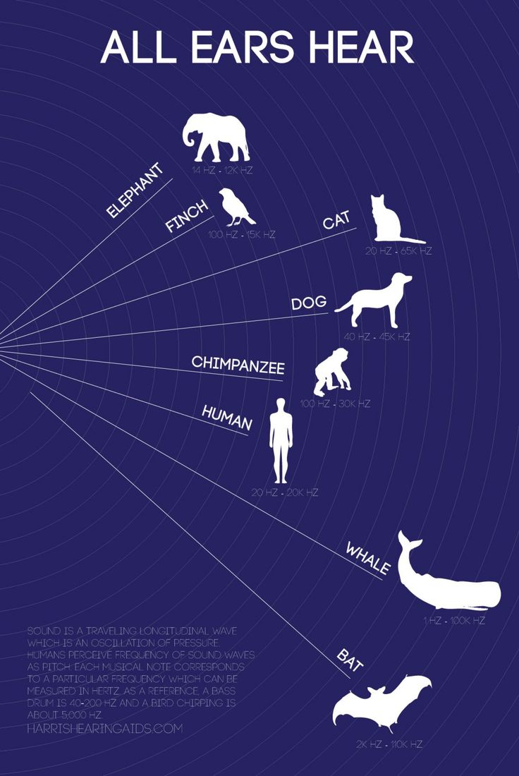 Frequency and hearing ability of various animals compared to humans - who and what can hear better than we can?