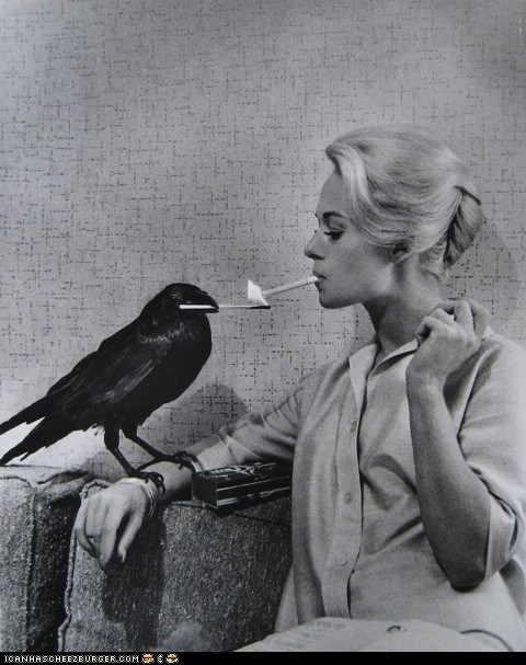 i don't always smoke, but when i do i let my crow light it.: The Crows, Trav'Lin Lights, Philippe Halsman, The Ravens, Alfred Hitchcock, Tippi Hedren, Photo, Birds, Tippihedren