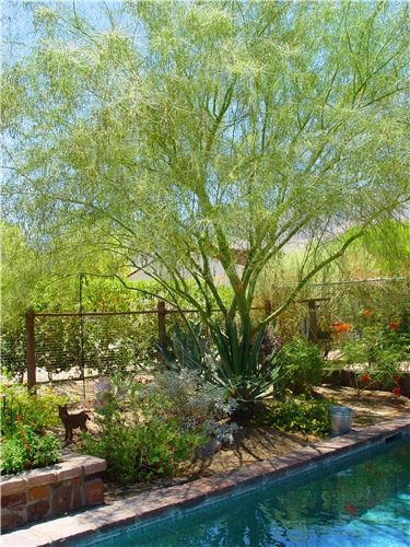 xeriscape garden:  Trees in the garden are vital to protecting plants from hot afternoon sun in the summer