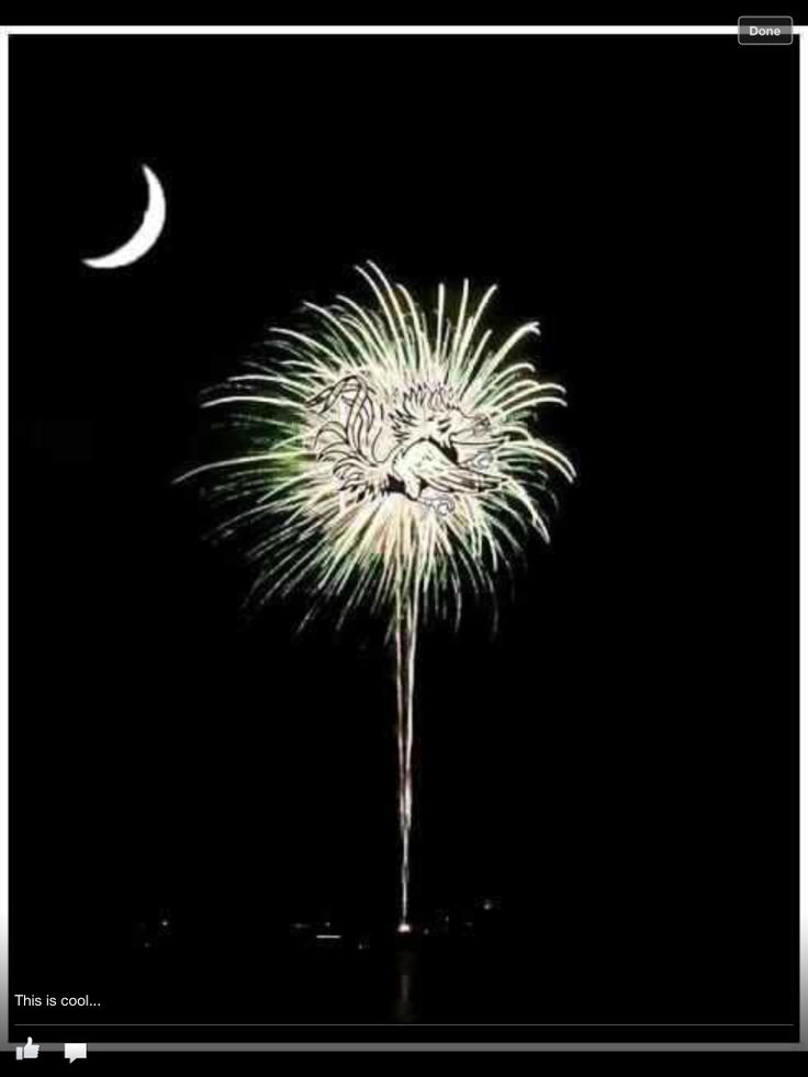 23 Best The Palmetto State Of Mind Images On Pinterest