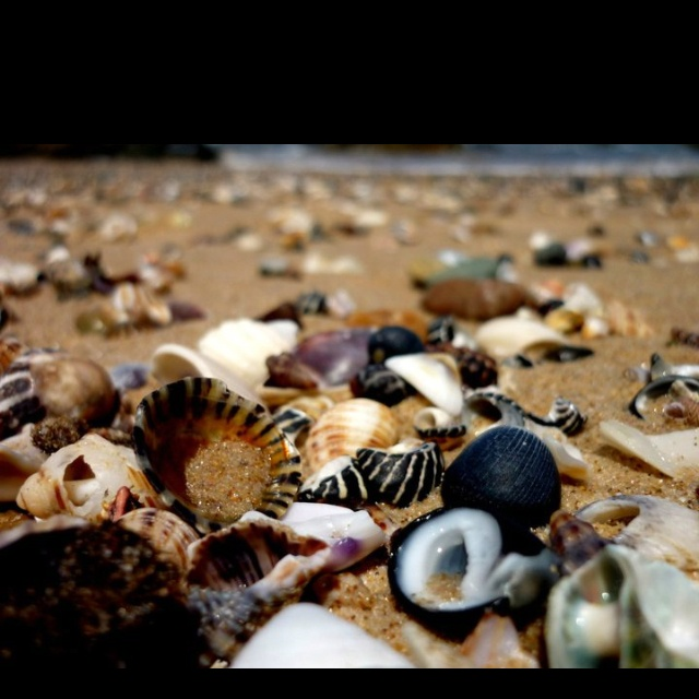 Shelly beach Port Mac Australia... Where Ez and I spent afternoons walking with mum as kids.