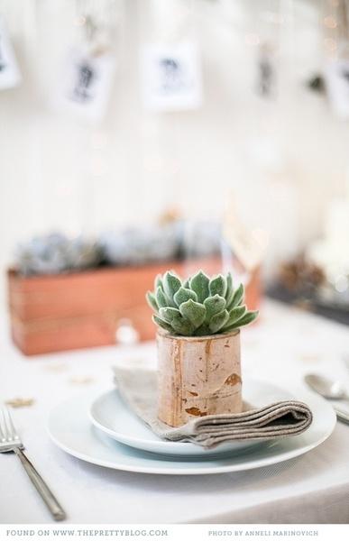 Cactus in bark container