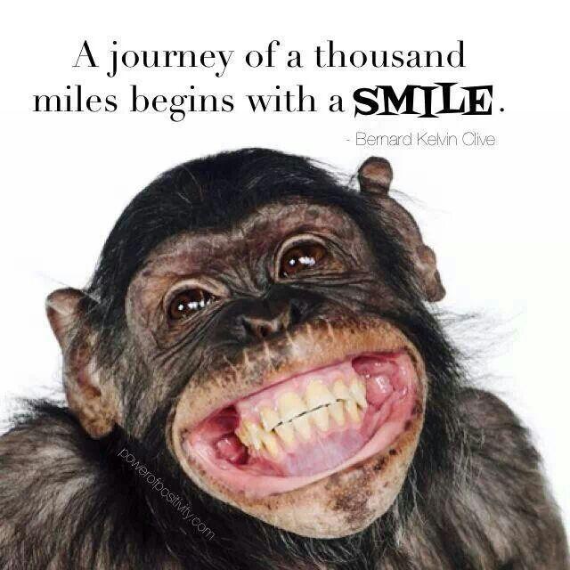 Puppy Love Preschool: Polite Smiles Primate Style |Monkey Big Smile