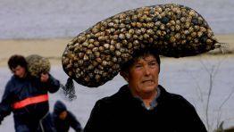 Mariscadora de berberechos en Anllóns, Galicia, Spain