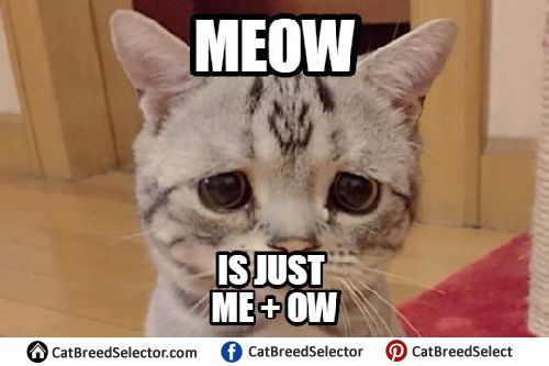Sad Cat Memes