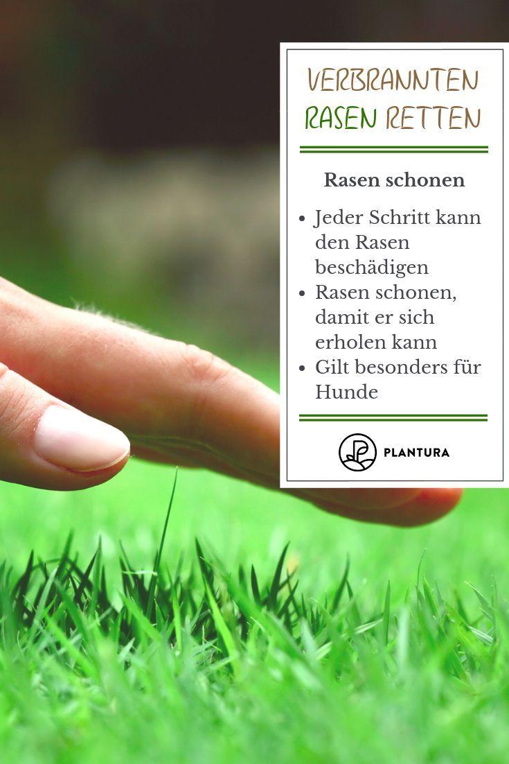 Verbranntes Gras 4 Tipps Zum Schutz Ihres Rasens Rasen Tipps Gartentipps