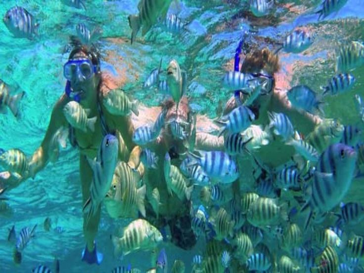 If diving is an activity that you really cannot do, snorkeling is really a good alternative. In this activity, you only need to do skin diving by wearing diving mask and also snorkel to help you breat - - YukmariGO.com