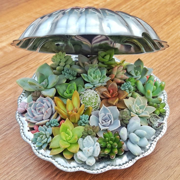 Succulent care tips