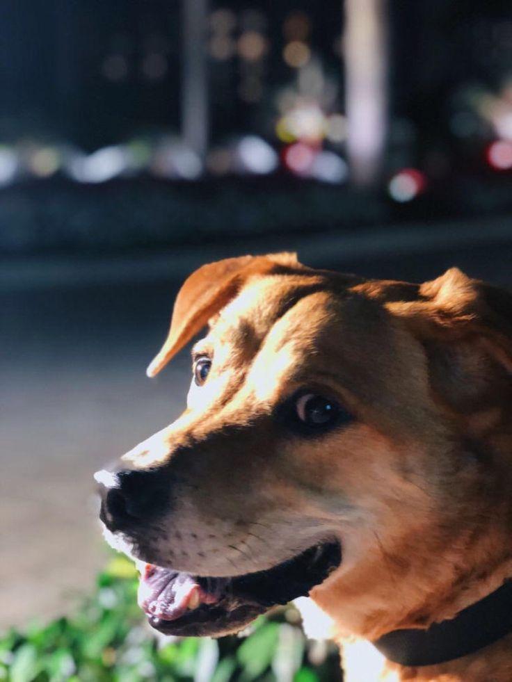 Puppy mill rescue florida 2020
