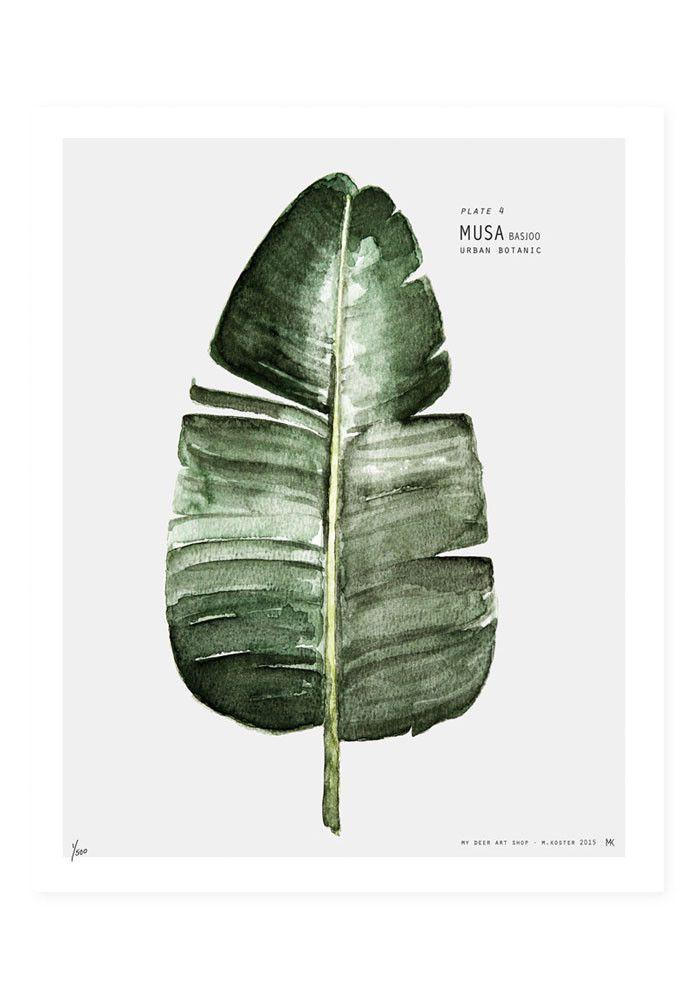 My Deer Art Shop- Musa Poster