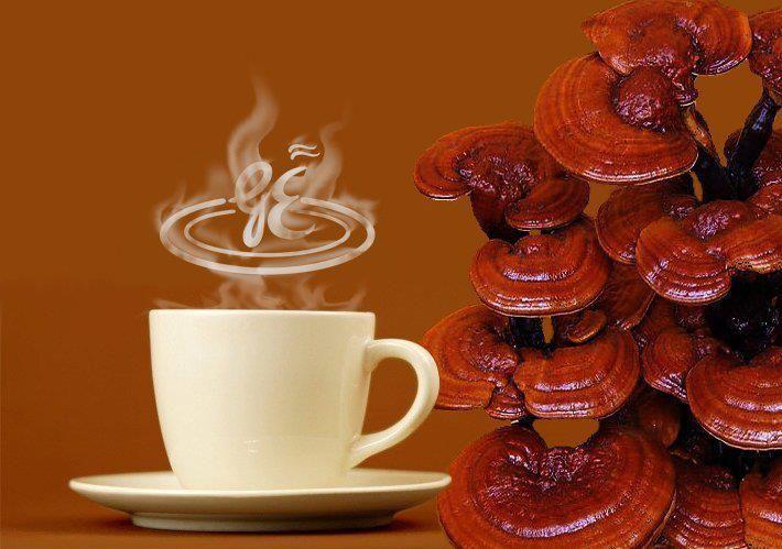 GanoLife es una multinacional encaminada a proporcionarnos Salud fisica y Salud financiera, Nuestra principal linea de distribucion y consumo, es cafe y chocolate con fitonutriente terapeuticos y antioxidantes. http://metacafecolombia.com/