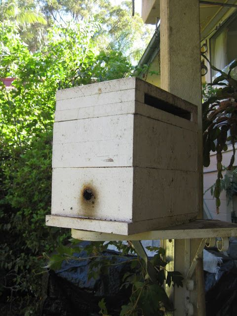 The Practical Frog Blog: Native Bee Hive Duplication (or Hive Eduction) - How its done...
