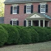 Boxwood Shrubs | Boxwood Plants | Fast Growing Trees