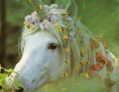 Photographed by Robert Vavra - he has made a whole book of unicorns:)