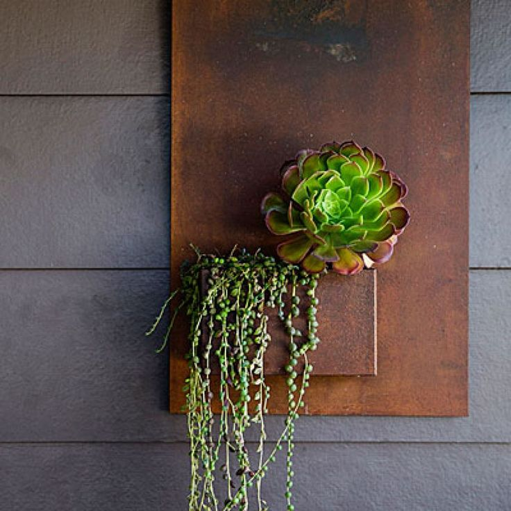 Urban chicHang a vertical planter by your front door to give a hip, urban feel to your doorstep. The living picture is dripping with 'String of Pearls' succulents (Senecio rowleyanus) and bronze-tipped aeonium.
