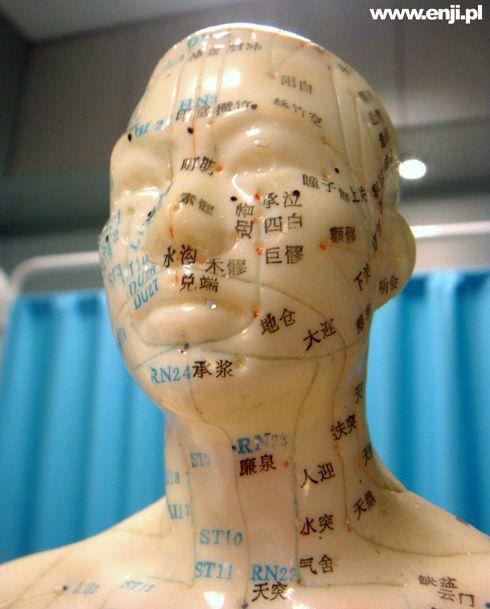 Gabinet Akupunktury prof Enji - człowiek z meridianami. Jak się do nas wybierzesz z pewnością go spotkasz :-). Tutaj akupunktura głowy i punkty z nią związane.