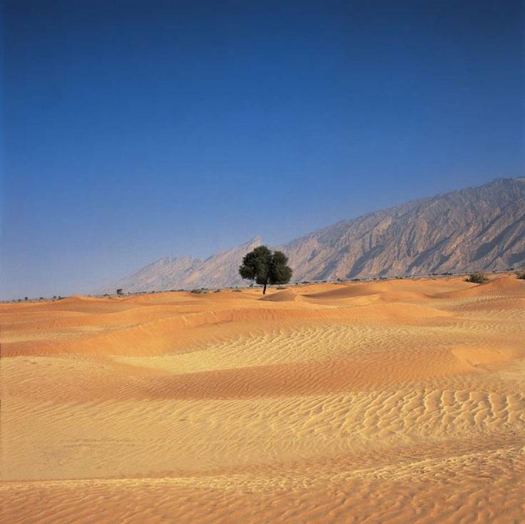 68 best arabian desert images on pinterest trips camel and desserts desert tree sciox Images