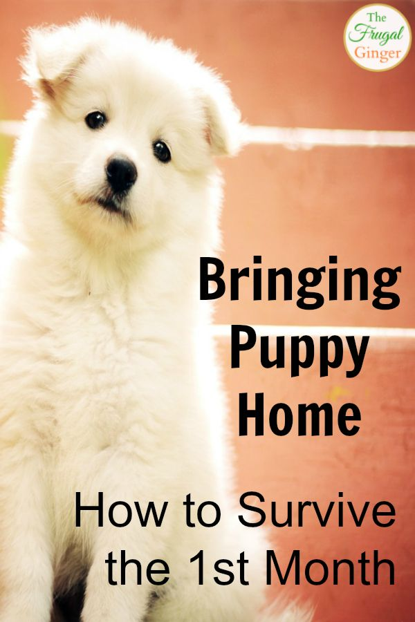 Getting a new puppy is an exciting time! I loved reading these tips so that I was prepared and had everything I needed for my little fur ball. #puppytips #dog #firstpuppy