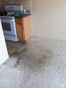 Results Heaven's Best Carpet Cleaning - La Grande OR Before Photo #4