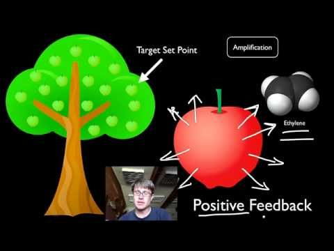 Positive and Negative Feedback Loops: Bozeman Biology youtube channel- lots of videos