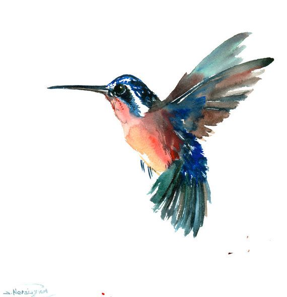 Hummingbird 12 X 12 in original watercolor by ORIGINALONLY on Etsy, $36.00