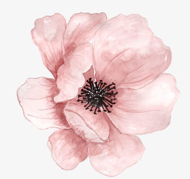 розовый росписью цветы, цветок, цветы, растенийИзображение PNG
