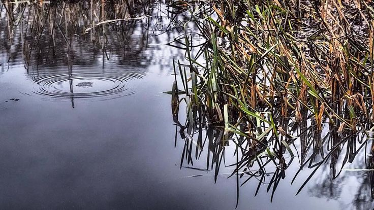 #lake #water #nature