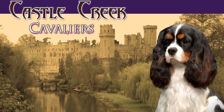 102 Best King Charles Caviler Spaniel Breeders Images On