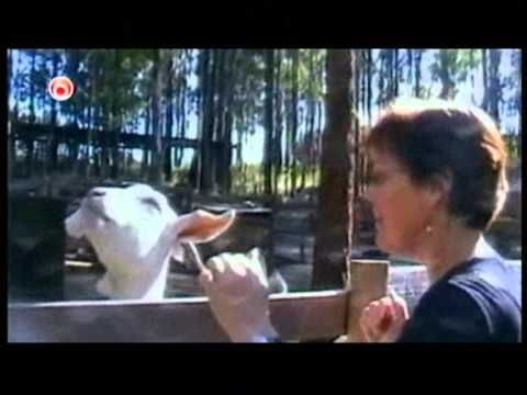 ★ Funny Animals - America's Funniest Home Videos - AFV part 379 - YouTube