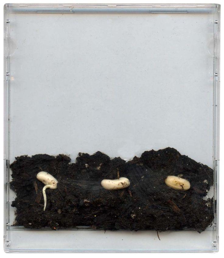 zaadjes in een cdhoesje, je ziet precies hoe alles groeit onder de grond