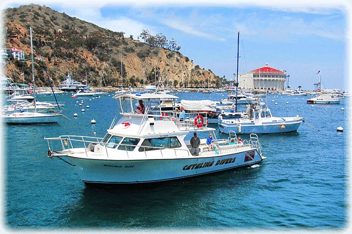 Catalina Divers Supply - Catalina Island, California - Dolphin Quest, Snorkeling, Scuba Diving, Whale Watching, Dolphin Watching, Scuba Certification & Classes, Scuba Diving Equipment