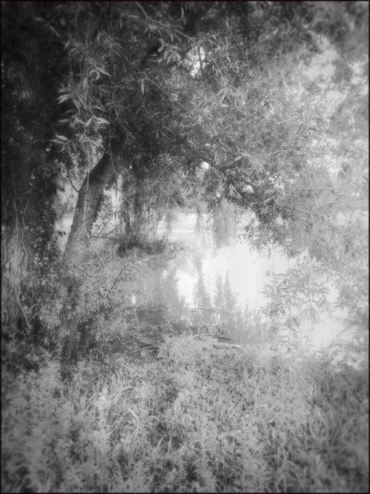 Le contraire et son contraire : In the deep South © Etienne Cabran