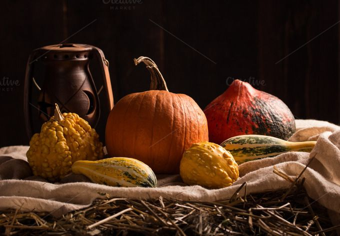 still life with pumpkins by peterzsuzsa on @creativemarket