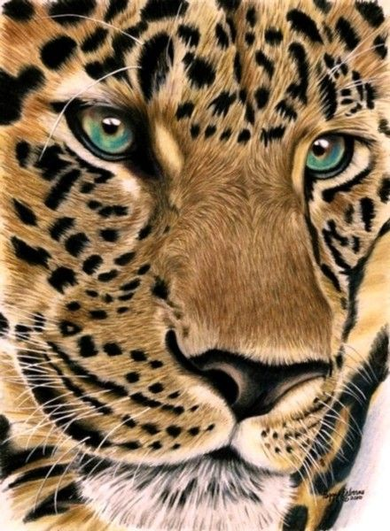 My first big cat. Done with Prismacolor pencils on 110 lb. paper, size 8x10. A gift for my future son in law.