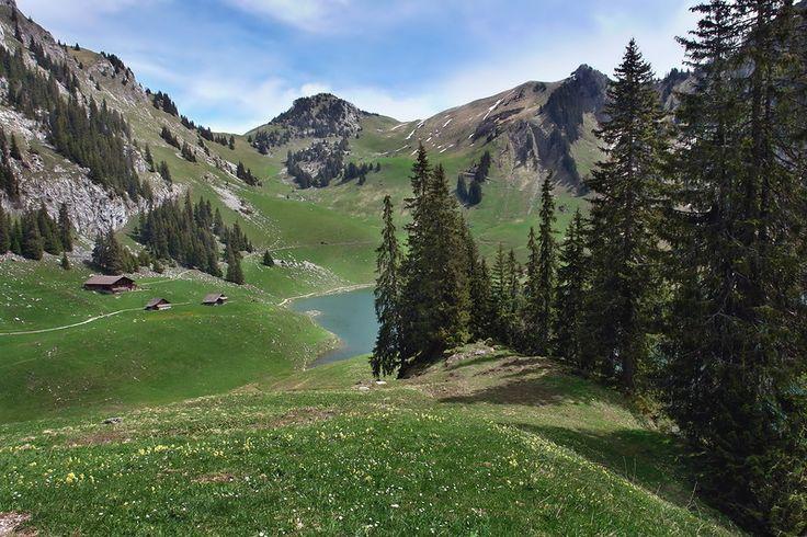 «В горах мое сердце... Доныне я там»  В горах мое сердце... Доныне я там.  По следу оленя лечу по скалам.  Гоню я оленя, пугаю козу.  В горах мое сердце, а сам я внизу.  Роберт Бернс
