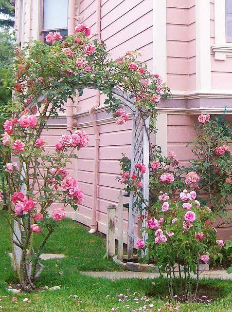 pink garden...not sure I'd go as far as painting the house PINK!  I don't mind looking at it at all, though!