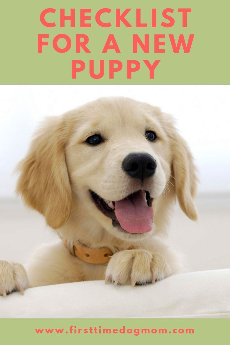 Are You Prepared For A New Puppy Make Sure You Have Everything