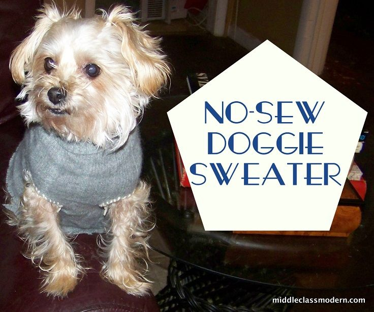 Free Dog Coat Patterns For Small Dogs