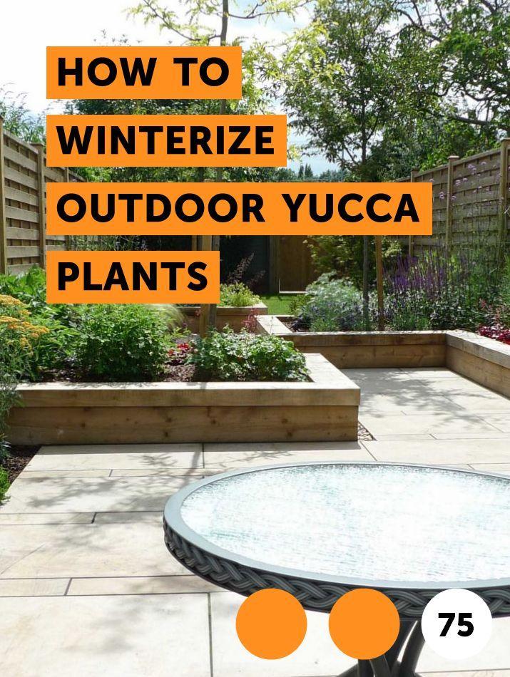 How To Winterize Outdoor Yucca Plants Outdoor Growing Hibiscus