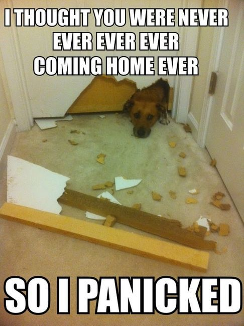 I have been greeted with similar scenes before....and i still love my puppies more than anything!