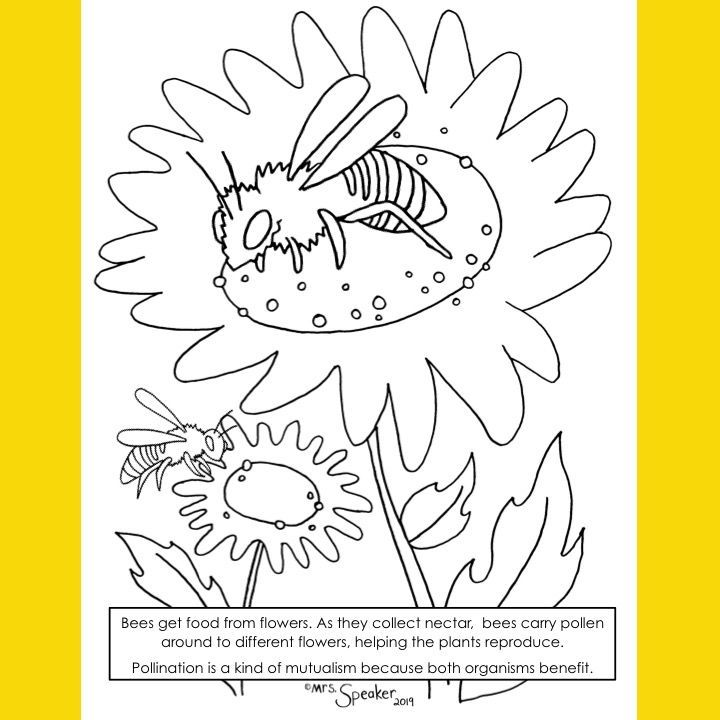 Bee And Flower Pollinator Coloring Page Bee On Flower Coloring