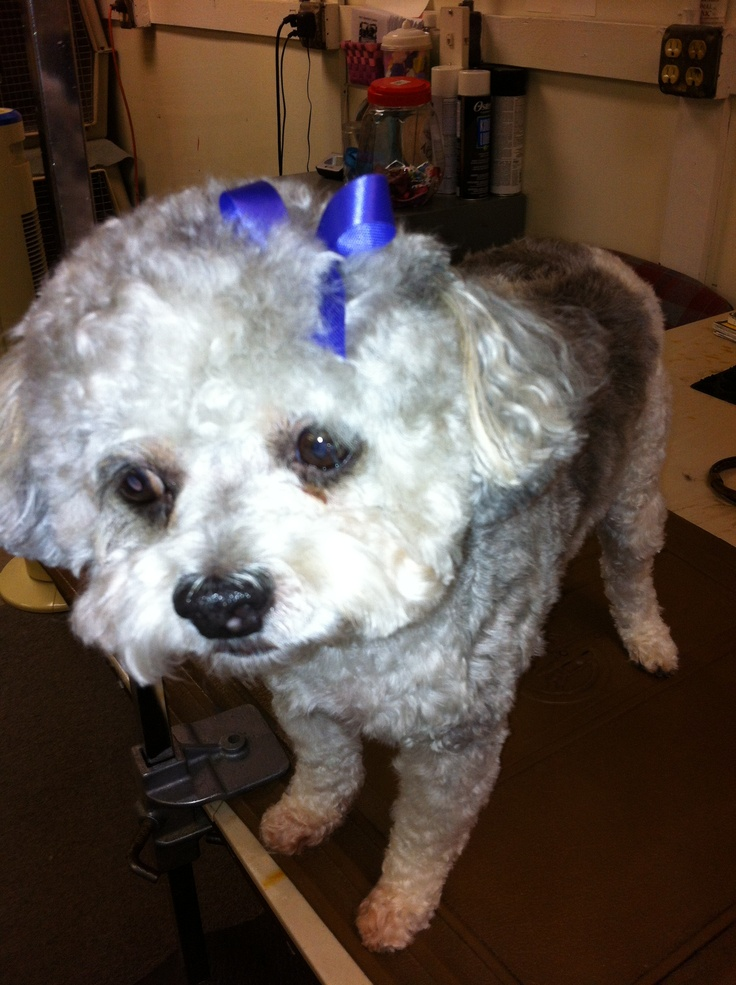 80 best pet grooming in houston texas images on pinterest houston buster at friend and companion pet grooming in houston texas 77040 713 896 8539 solutioingenieria Gallery