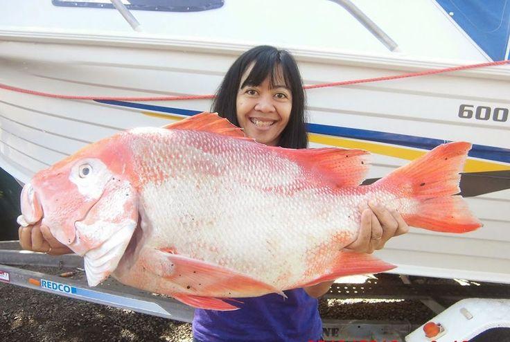 Menikmati Keindahan dan Keajaiban Alam di Flying Fish Point Queensland, Australia