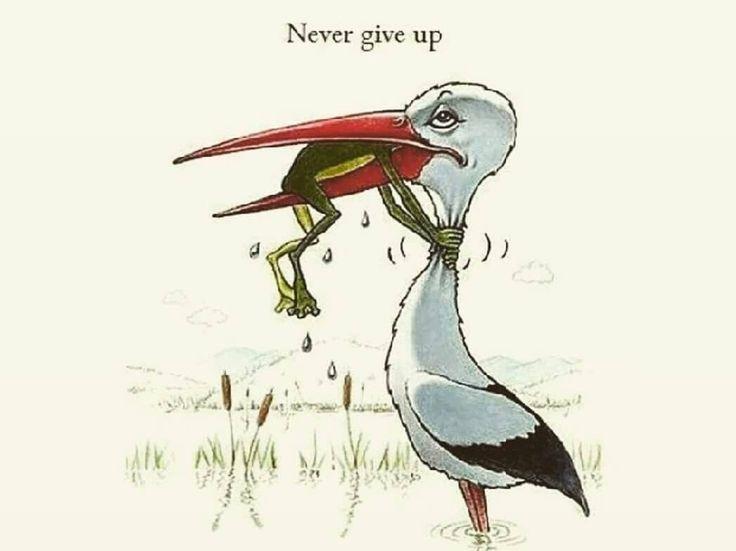 Never give up. #bjj #jiujitsu