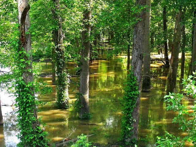 Ons onderwerp was droogte/natheid. Bij deze een plaatje van een ondergelopen bos, wat de groei van deze bomen niet ten goede gaat komen. Om dit te voorkomen, kan men bijvoorbeeld een dijk aanlegggen