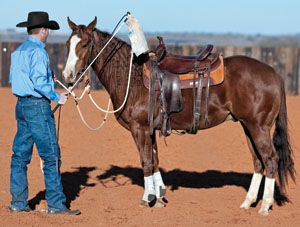3 Ways to De-Spook Your Horse